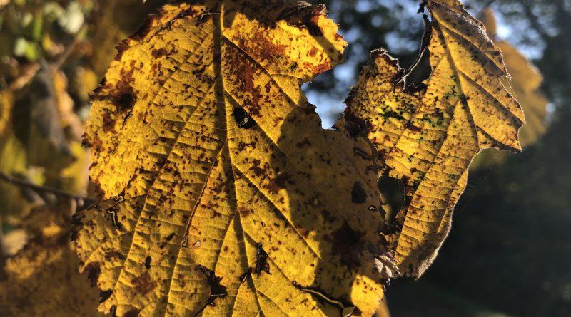 Höstens färger är vackra