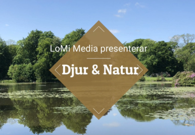 En ny film av LoMi Media