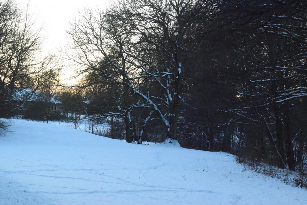 Vinterbild Skånes 20160105 DSC_0406